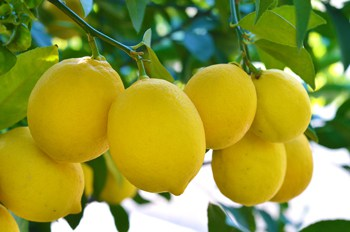 lemonade-from-real-lemons